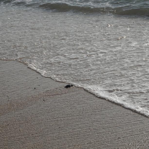 Finally... in the water. Goodbye my little friend.